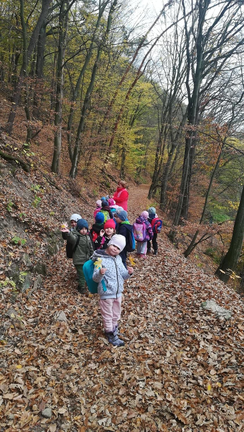 Krásy lesa-turistická vychádzka